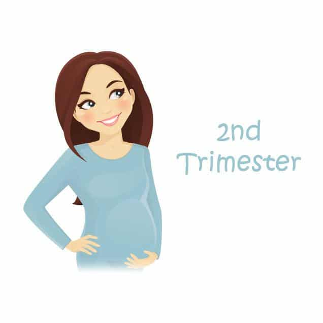 Second Trimester: Everything You Want to Know | Baby Advisor